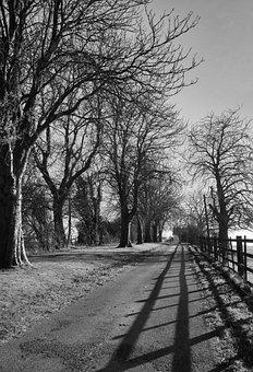 Road, Leading Lines, Trees, Fence, Shadows, Monochrome