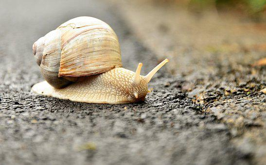Snail, White Snail, Shell, Crawl, Mollusk, Animal