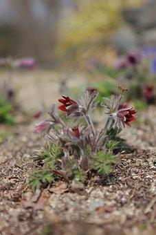 Do Mi Flower, Flowers, Wildflower, Spring, Nature