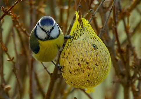 Blue Tit, Fat Balls, Bird Seed, Winter Feeding, Feeding