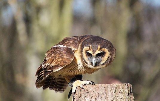 Owl, Bird, Nature, Animal World, Eyes, Plumage, Feather