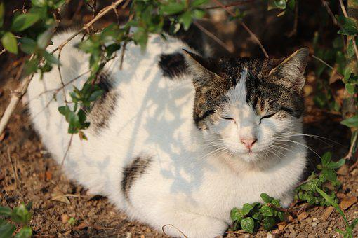 Beautiful, Cat, Pose, Sleep, Animal, Animals, Istanbul