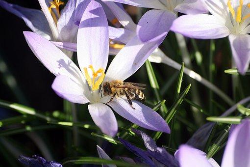Bee, Pollination, Walk In The Park, Hh, Hamburgensien