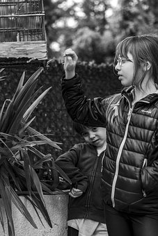 Bird, Cage, Garden, Black And White, Girl, Boy, Young