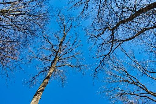 Trees, Sky, Blue, Aesthetic, Kahl