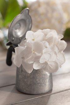 Hydrangea, White, Summer, Pure, Flower, Flowers, Nature