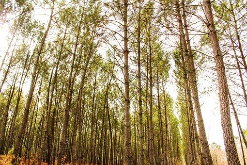 Forest, Tree, Wood, Trunk, Organic, Trees, Foliage