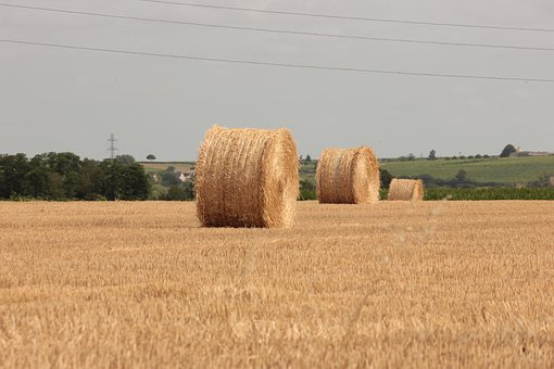 Straw, Field, Agriculture, Summer, Cereals, Landscape