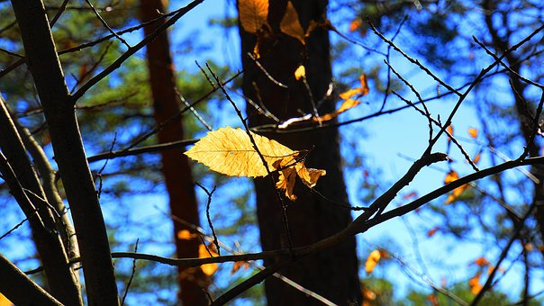 Winter, Last Leaves, Forest, Fall Color, Yellow
