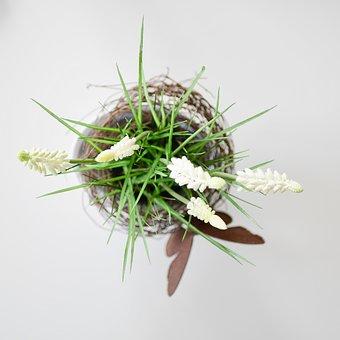 Plant, Table, Topshot, Leaf, White, Design, Desk, Green