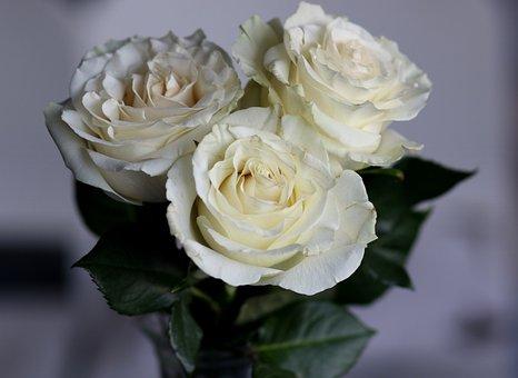 Roses, White, Petals, Bouquet, Flowers, Romantic, Love