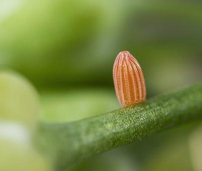 Egg, Butterfly, Orange-tip, Micro, Macro, Close, Orange