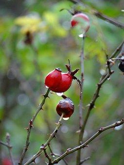 Berry, Drops, Rain, Red, Natural, Water, Fresh