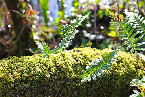 Moss, Growth, Forest, Nature, Plant, Green, Environment