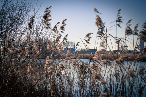 Reed, Water, Holland, Landscape, Nature, Countryside