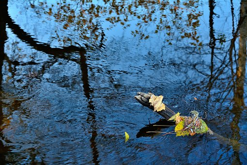 River, Nature, Trees, Outdoors, Waters, Autumn, Leaves