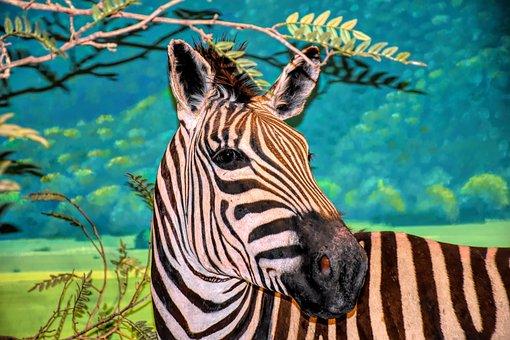 Zebra, Wildlife, Africa, Nature, Safari, Animal, Mammal