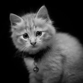 Portrait, Kitten, Cat, Pet, Cute, Animal, Eyes, Face