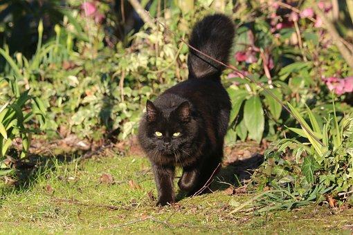 Cat, Black, Animal, Feline, Predator