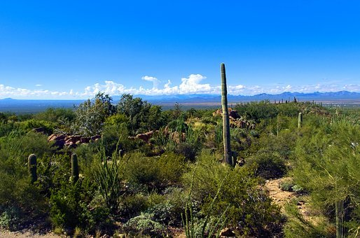 Saguaro View, Arizona-sonora Desert Museum, Arizona