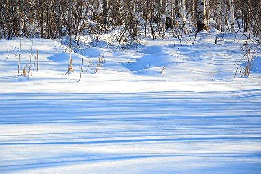 Forest, Winter, Nature, Snow, Shadow, Snowdrifts, Grass