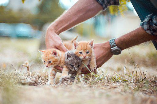 Kittens, Kitten, Red, Orange, Color, Gray, Three, Small