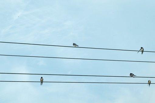 Birds, Communication, Twitter, Dialogue