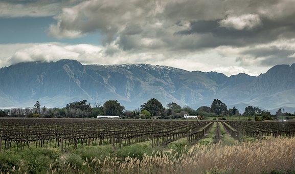 Little Karoo, South Africa, Sky, Vines, Winegrowing