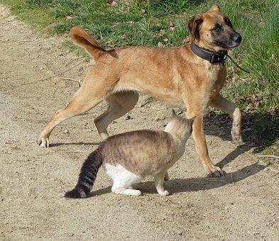 Dog Cat, Dog, Cat, Animal, Animals, Two