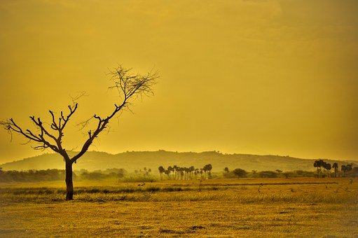 Dry, Arid, Yellow, Nature, Landscape, Desert, Drought