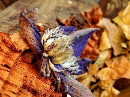 Leaves, Flower, Nature, Blossom, Bloom, Plant, Leaf