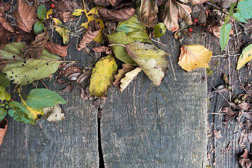 Autumn, Leaves, Colorful, Brown, Withers, Fall Foliage