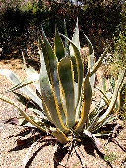 Desert, Landscape, Scenery, Rock, Cactus, Hot, Dry
