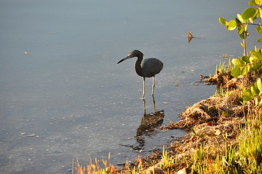 Heron, Bird, Florida, Beach, Water, Nature, Wildlife