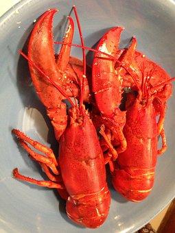 Lobster, Seafood, East Coast, Dinner, Gourmet, Boiled