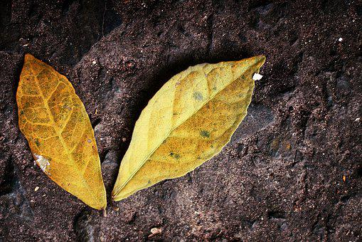 Leaves, Golden, Yellow, Autumn, Ground, Two, Gold