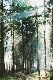 Forest, Trees, Mystical, Sun, Back Light, Nature