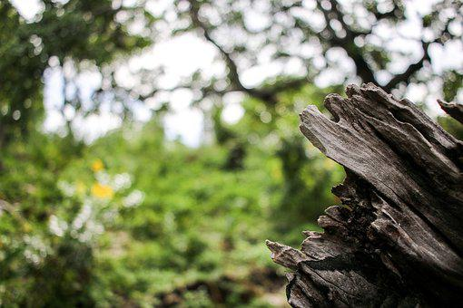 Nature, Wood, Withers, Weather, Weathered, Crash