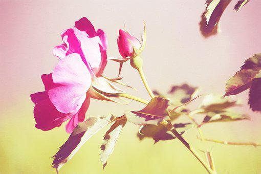Image, Painting, Paint, Digital Painting, Rose, Blossom