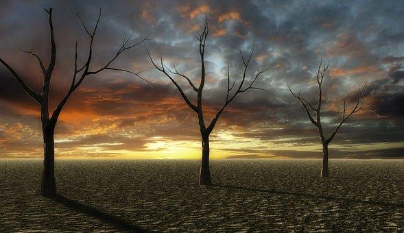 Sunset, Desert, Dry, Trees, Sandy Soil, Landscape