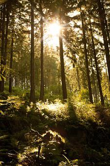Forest, Sun, Nature, Light, Shadow, Bright, Leaves