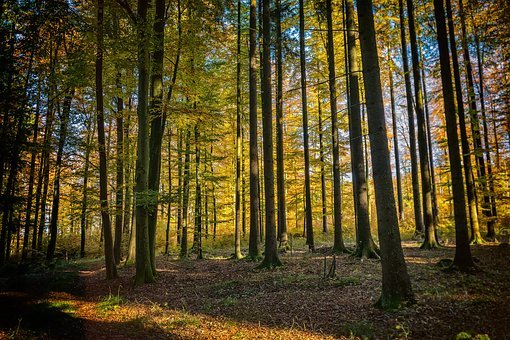 Trees, Forest, Nature, Landscape, Flooded, Autumn