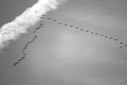 Migratory Birds, Cranes, Flock Of Birds, Hike, Season