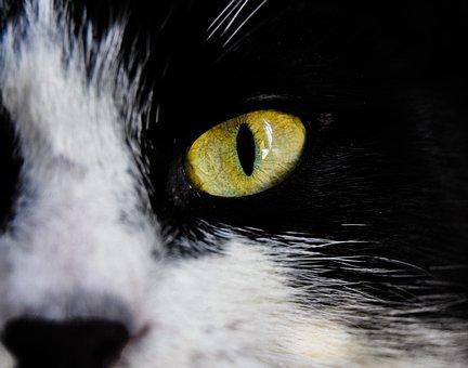 Eyes, Green Eye, Cat, Kitten, Iris, Animals, Macro