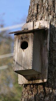 Birdhouse, Nature, Bird, Wooden, Outdoor, Feeder