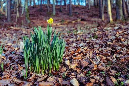 Scotland, Britain, Uk, Landscape, Flower, Bloom, Nature
