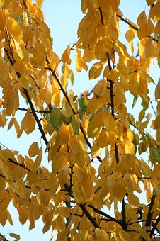 Leaves, Autumn, Tree Trees, Forest, Nature, Colorful