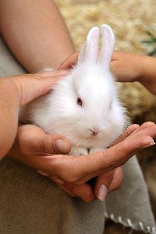 Rabbit, Animals, Rodents, Nature, White, Fur, Hands