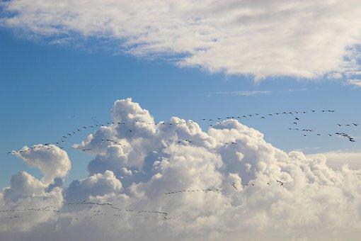 Bird Migration, Migratory Birds, Swarm, Collect, Sky