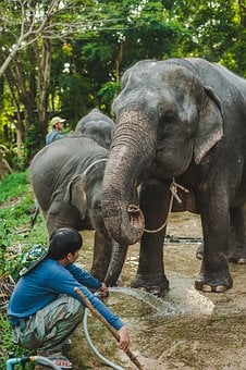 Thailand, Elephant, Baby, Mom, Water, Man, Two, Shower
